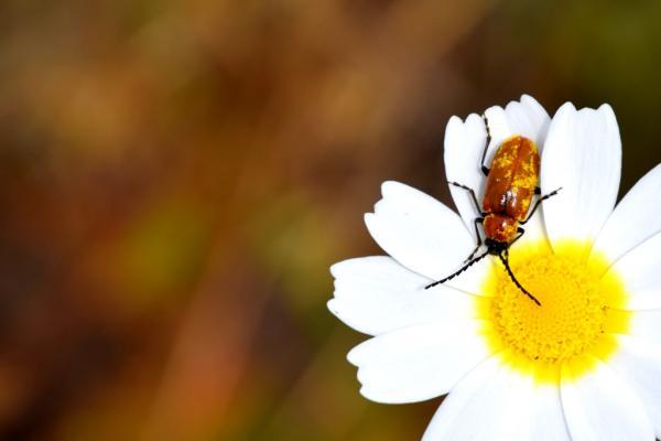 MHS witgele bloem met insect